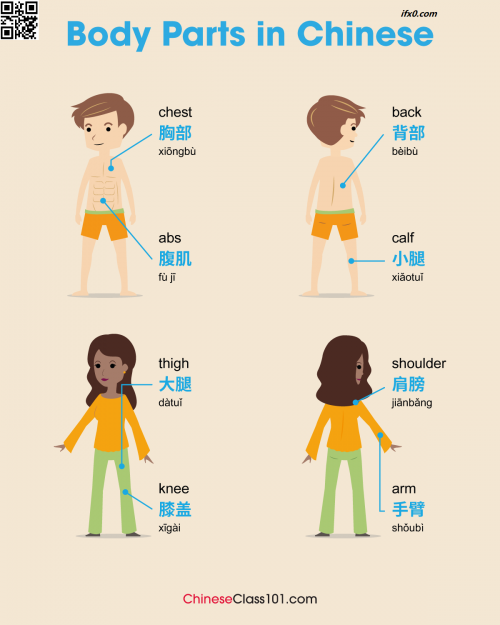 body-in-Chinese-thigh-should-arm-calf-abs.png